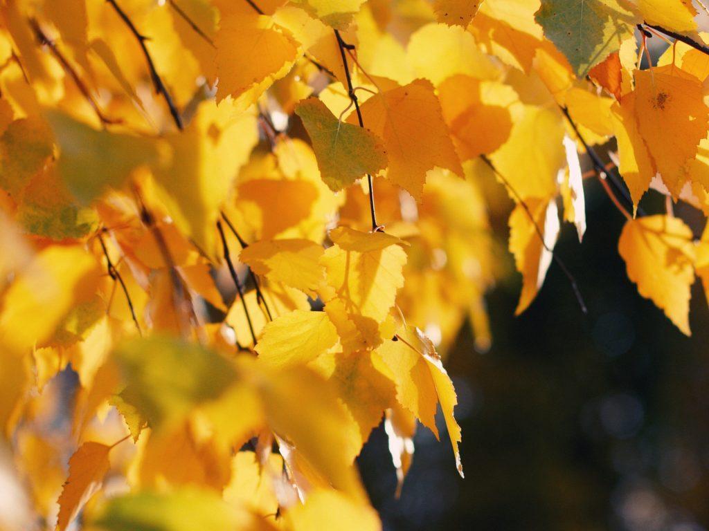 Октябрь на дворе картинки и фото (10)