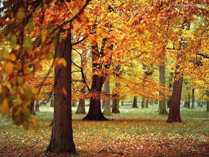 Октябрь на дворе картинки и фото (11)