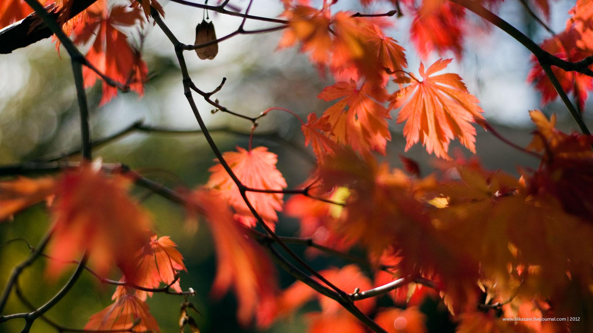 Октябрь на дворе картинки и фото (3)