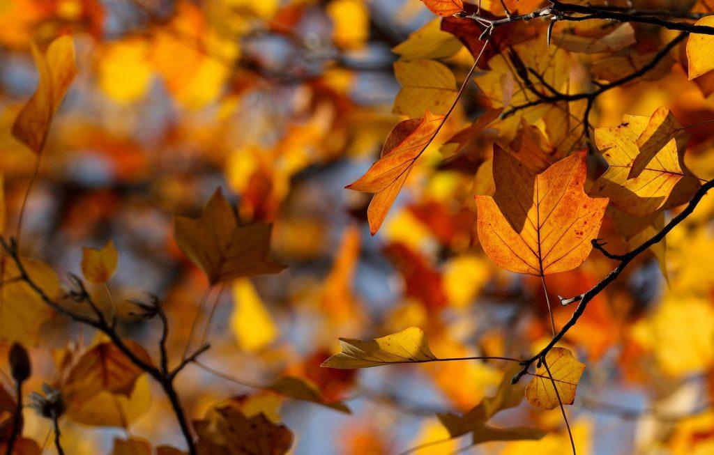 Октябрь на дворе картинки и фото (5)