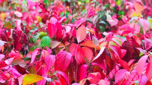 Октябрь на дворе картинки и фото (8)