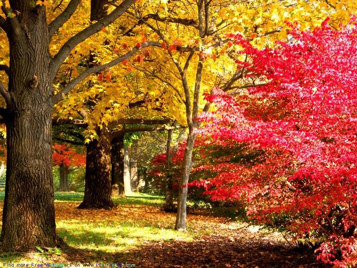 Октябрь на дворе картинки и фото (9)