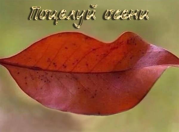 Осень и вторник красивые картинки009