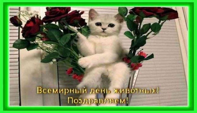 Приятные поздравления картинки на Всемирный день животных003