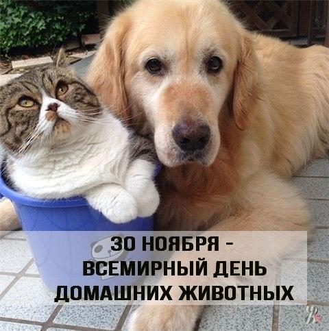 Приятные поздравления картинки на Всемирный день животных009