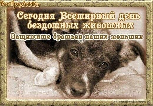 Приятные поздравления картинки на Всемирный день животных012
