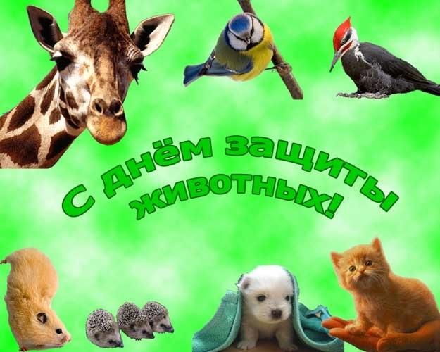 Приятные поздравления картинки на Всемирный день животных018