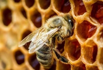 Савватий Пчельник фото и картинки на праздник008