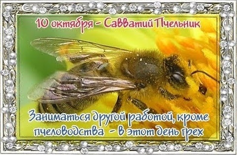 Савватий Пчельник фото и картинки на праздник010