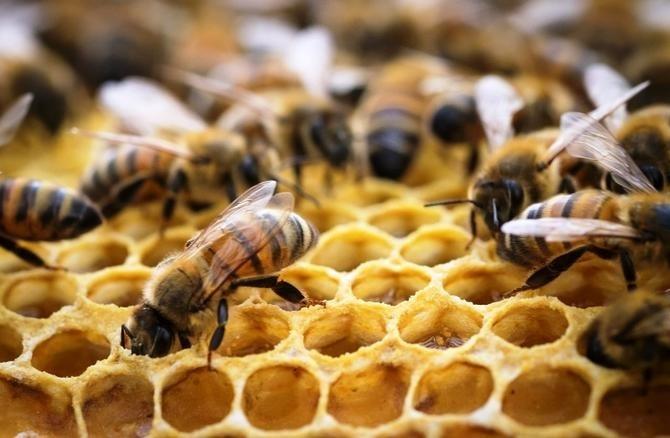 Савватий Пчельник фото и картинки на праздник015