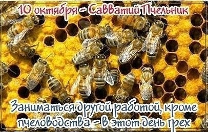 Савватий Пчельник фото и картинки на праздник020
