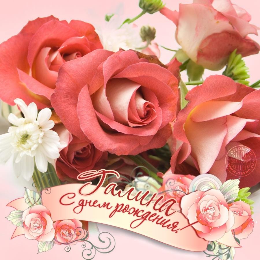 розы гале картинка белла картинки
