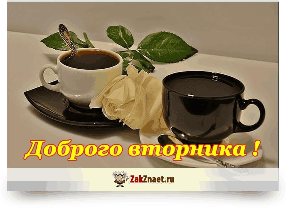 С добрым утром вторника фото и открытки011
