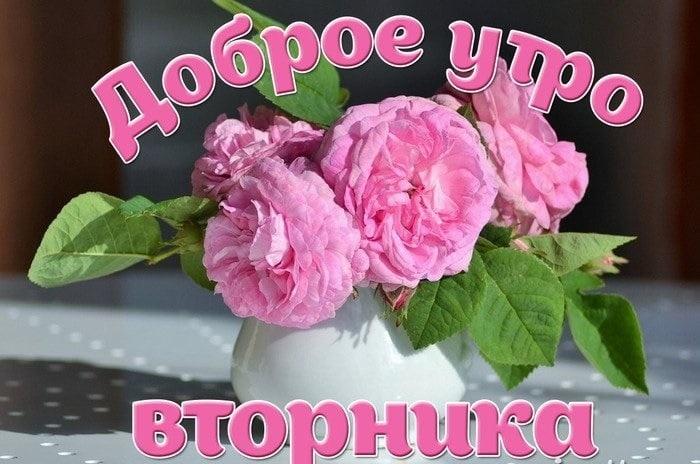 С добрым утром вторника фото и открытки013
