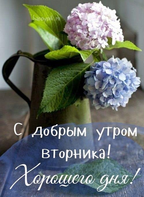 С добрым утром вторника фото и открытки020