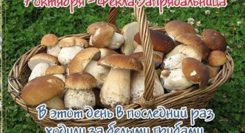Фекла Запрядальница картинки и фото на праздник008
