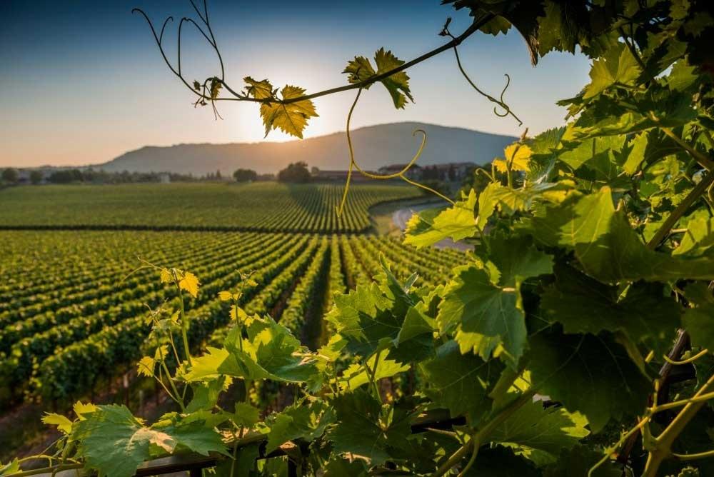 Фестиваль винограда в Марино009