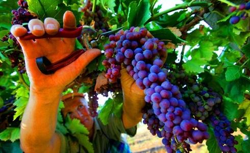 Фестиваль винограда в Марино012
