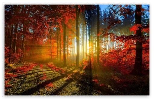 Фоны октябрь в хорошем качестве012