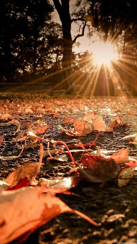 Фоны октябрь в хорошем качестве015