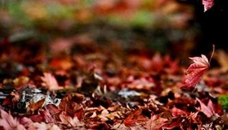 Фоны октябрь в хорошем качестве017