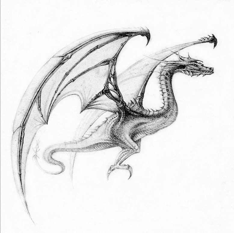 Эскиз дракон с цветами - подборка фото006
