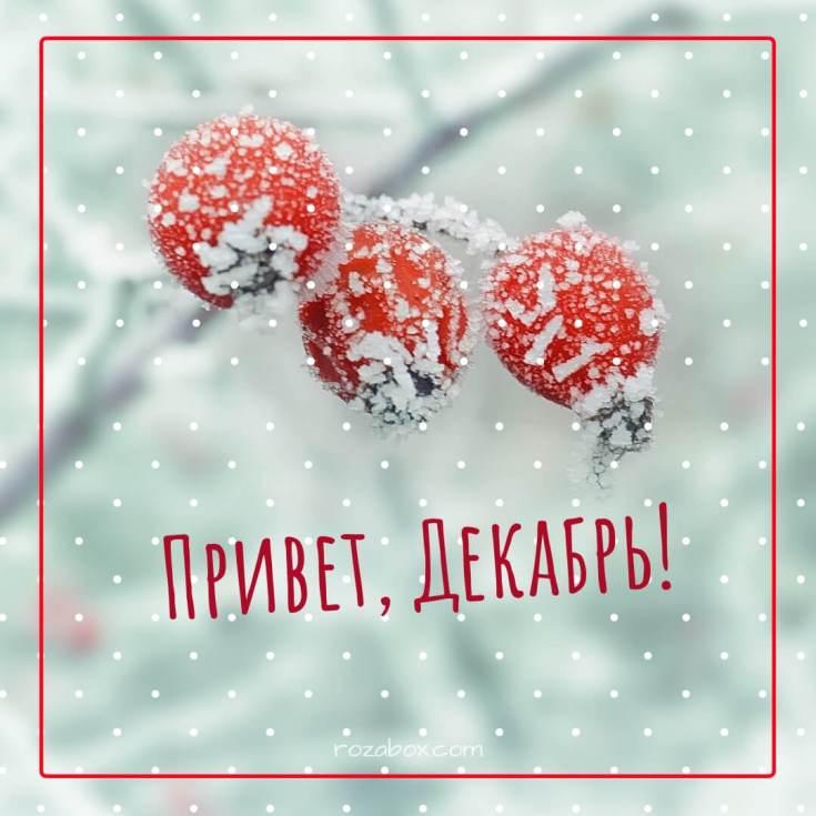 А вот и зима пришла картинки (18)