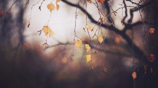 А вот и ноябрь картинки (2)