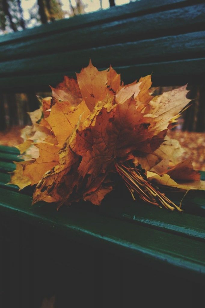 А вот и ноябрь картинки (4)