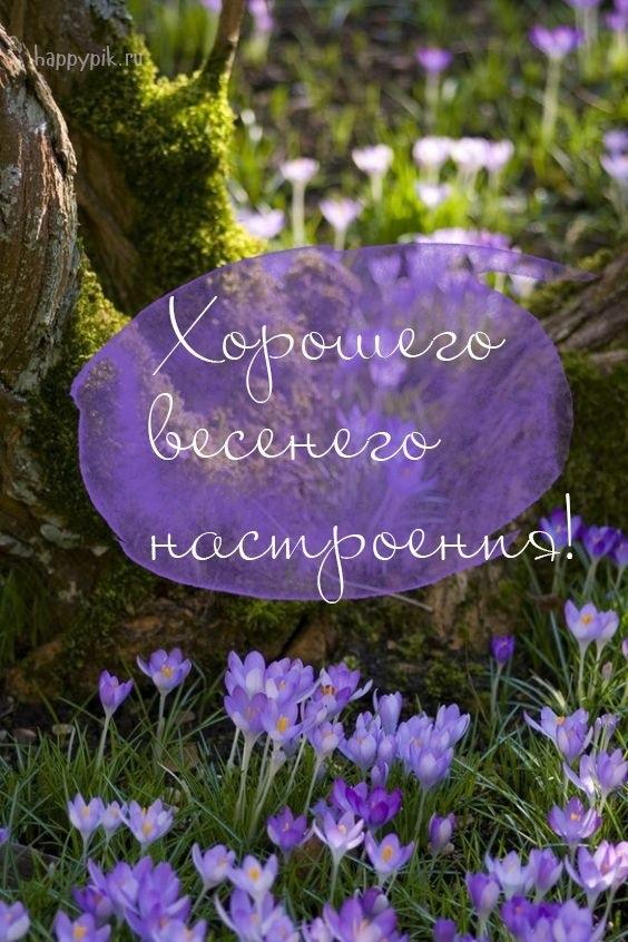 Весенние открытки с пожеланием доброго утра006
