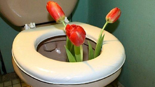 Всемирный день туалета прикольные картинки (5)