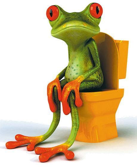 Grenouille et wc