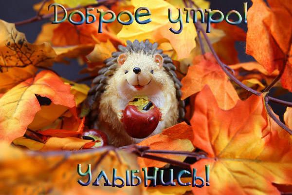 Доброе теплое утро ноября картинки красивые (14)