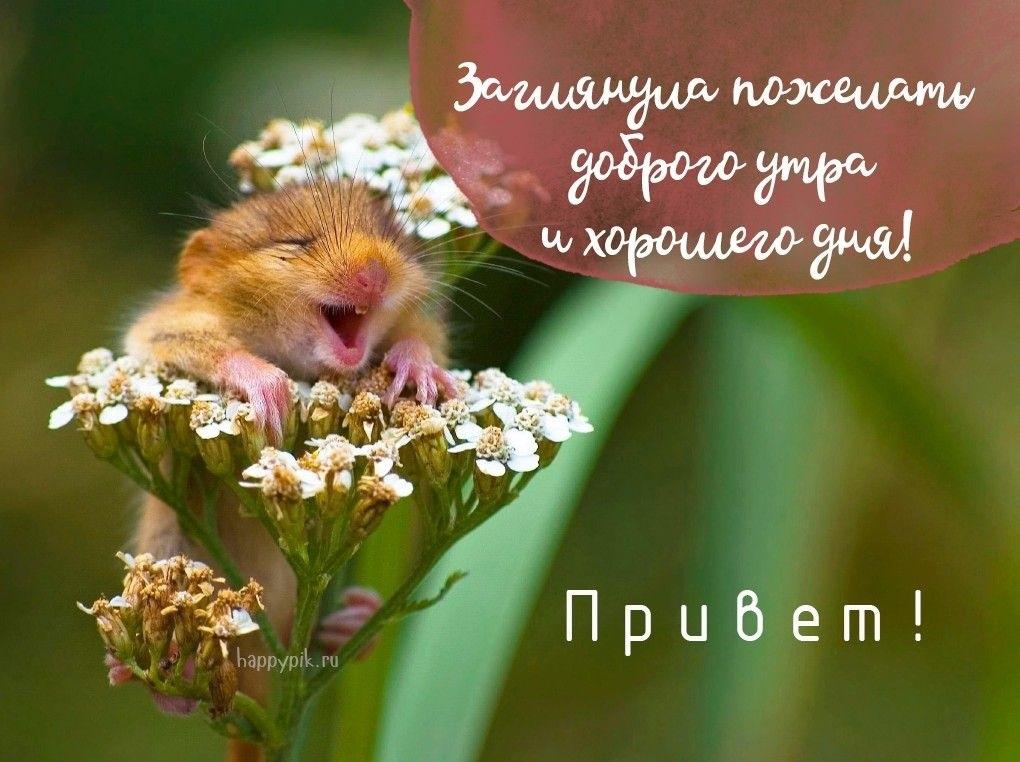 Доброе утро  Привет  Прикольные картинки004
