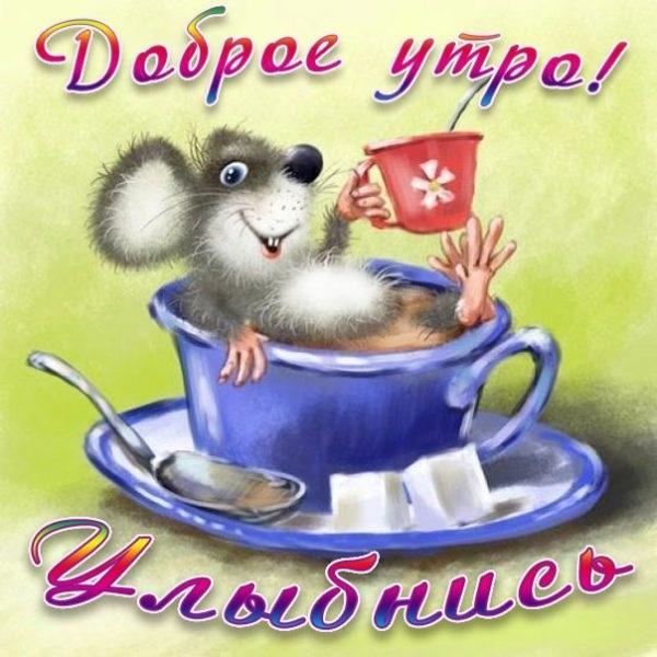 Доброе утро  Привет  Прикольные картинки005