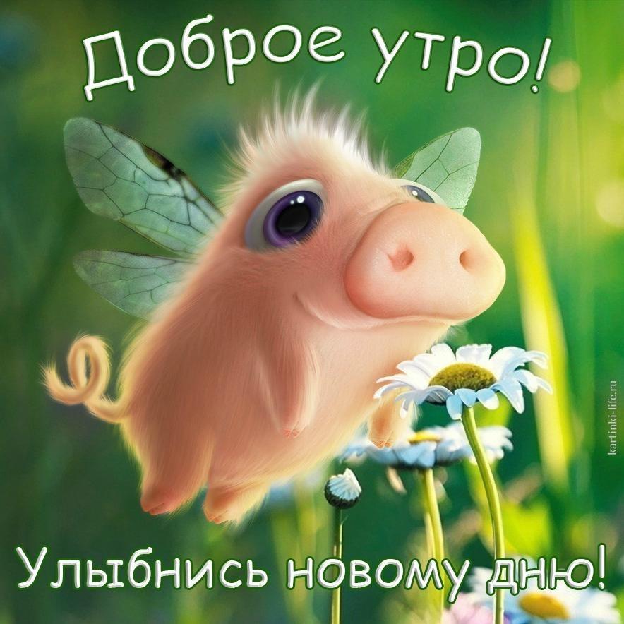 Доброе утро  Привет  Прикольные картинки007