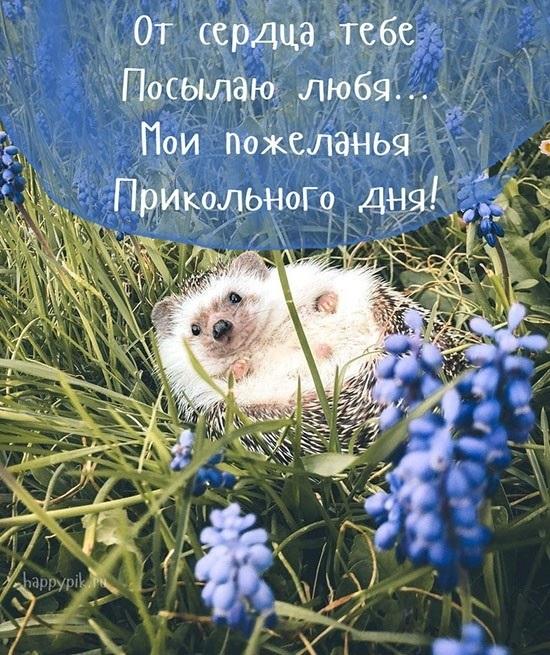 Доброе утро  Привет  Прикольные картинки015