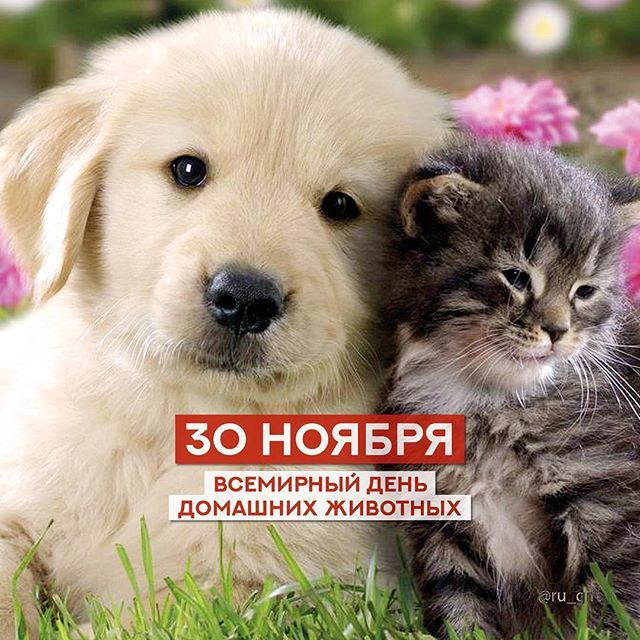Всемирный день домашних животных стихи задание