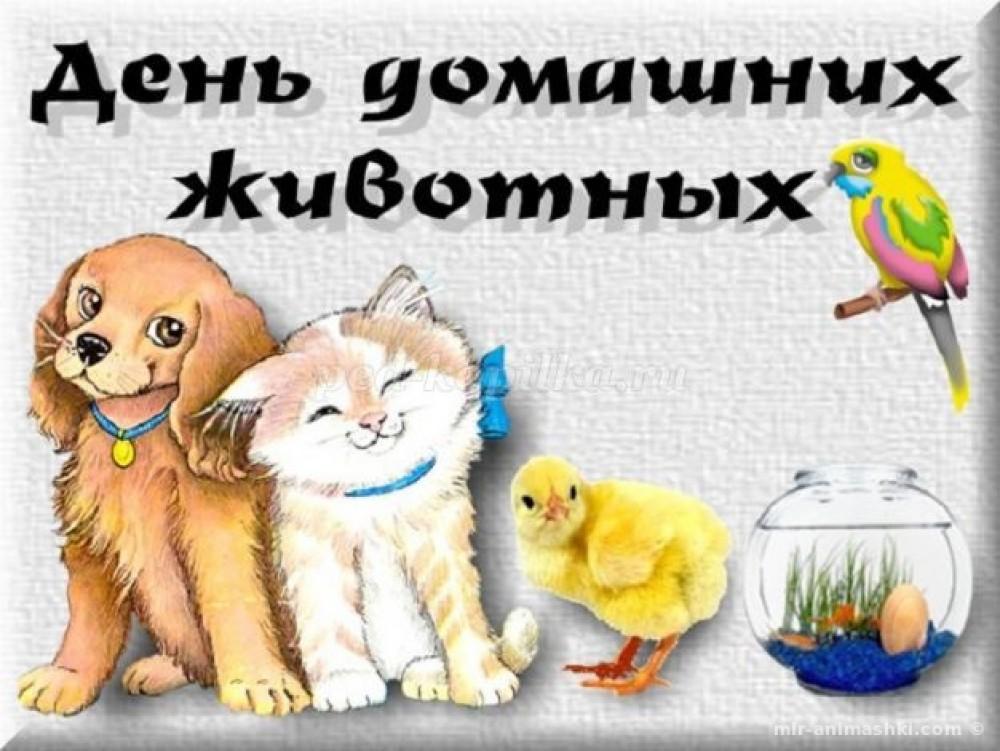 Картинки на Всемирный день домашних животных (10)