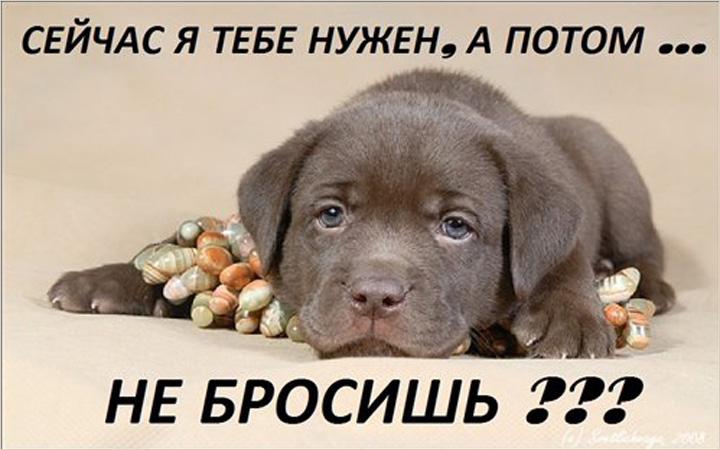 Картинки на Всемирный день домашних животных (11)