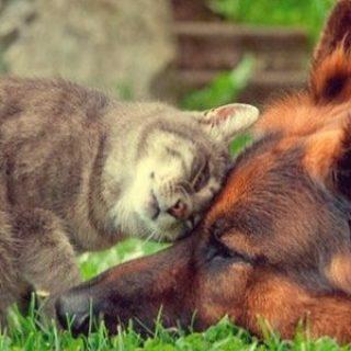 Картинки на Всемирный день домашних животных (3)