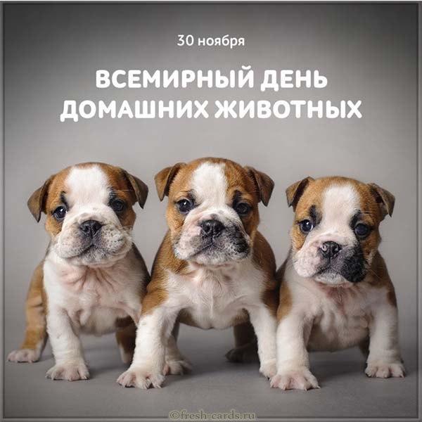 Картинки на Всемирный день домашних животных (4)