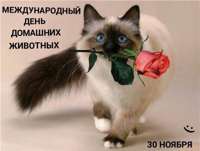 Картинки на Всемирный день домашних животных (6)