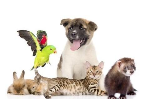 Картинки на Всемирный день домашних животных (9)
