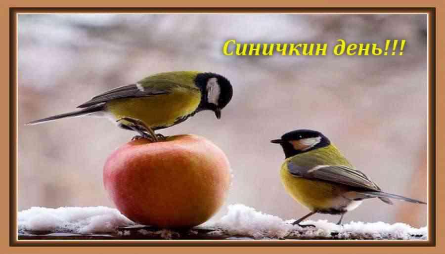 Картинки на праздник Синичкин день (11)
