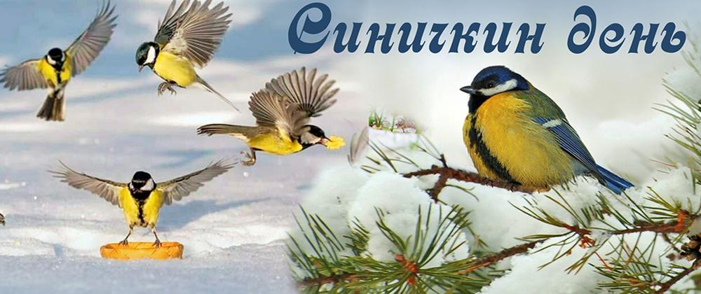 Картинки на праздник Синичкин день (14)