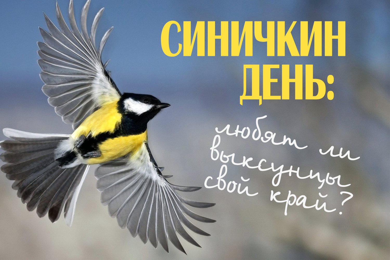 Картинки на праздник Синичкин день (17)
