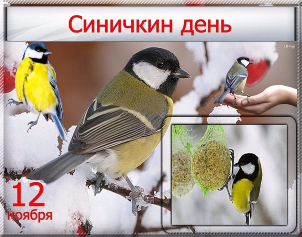 Картинки на праздник Синичкин день (19)