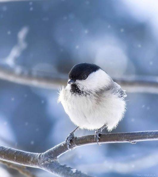 Красивые картинки доброе зимнее утро (7)