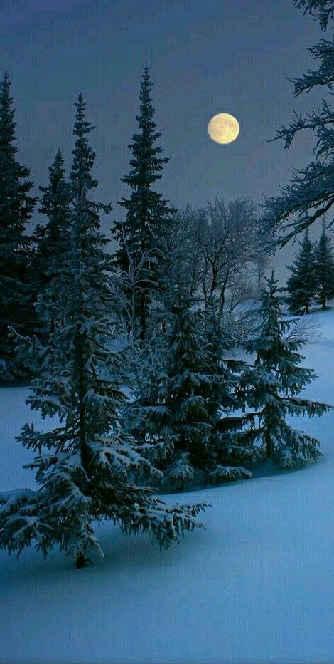 Красивые картинки зимы на заставку телефона (32)